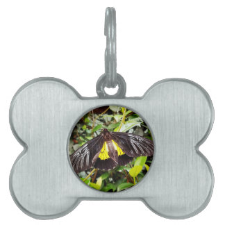pretty black yellow butterfly photograph pet tag