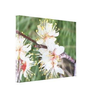 Pretty Blooms Canvas Print