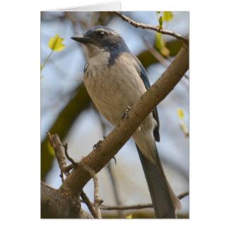 Pretty Blue Bird Card