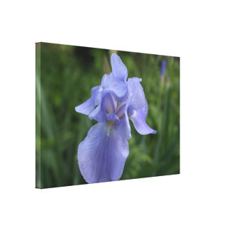 Pretty Blue Iris Flower Canvas