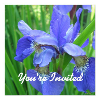 Pretty blue iris flowers blank wedding party invitation