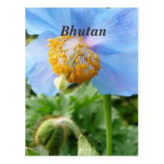 Pretty Blue Poppy Post Card