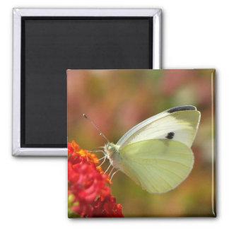 Pretty Butterfly Magnet
