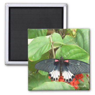 Pretty Butterfly Square Magnet