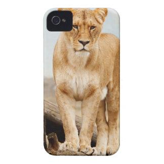 Pretty cat Case-Mate iPhone 4 case