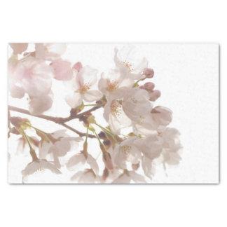 Pretty Cherry Blossoms Tissue Paper