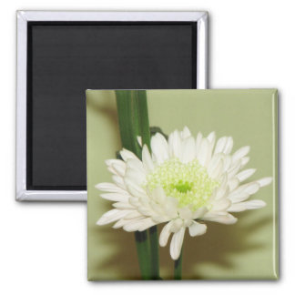 Pretty Chrysanthemum Magnet