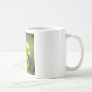 Pretty Daffodils, Narcissus 03.1 Coffee Mug