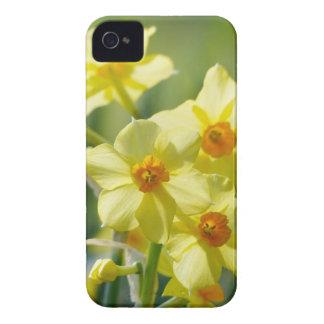 Pretty Daffodils, Narcissus 03.1 iPhone 4 Case
