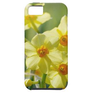 Pretty Daffodils, Narcissus 03.1 iPhone 5 Case