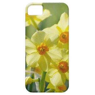 Pretty Daffodils, Narcissus 03.1 iPhone 5 Covers