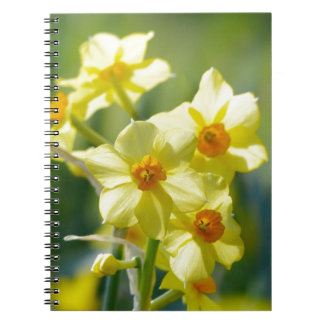 Pretty Daffodils, Narcissus 03.1 Notebook
