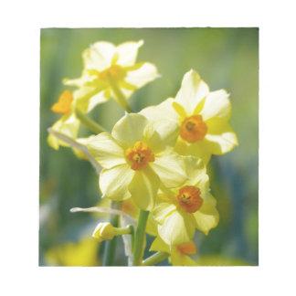 Pretty Daffodils, Narcissus 03.1 Notepad