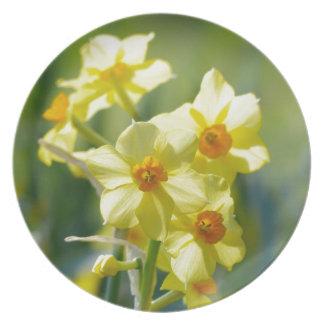 Pretty Daffodils, Narcissus 03.1 Plate