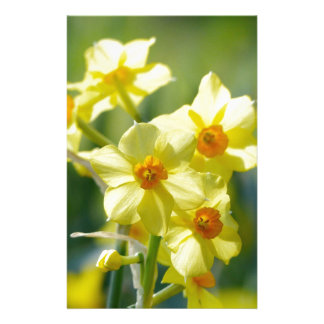Pretty Daffodils, Narcissus 03.1 Stationery