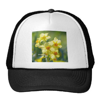 Pretty Daffodils, Narcissus 03.1 Trucker Hat