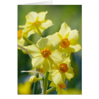 Pretty Daffodils, Narcissus 03.2 Card