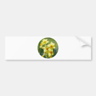 Pretty Daffodils, Narcissus 03.2_rd Bumper Sticker