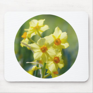 Pretty Daffodils, Narcissus 03.2_rd Mouse Pad