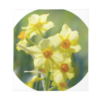 Pretty Daffodils, Narcissus 03.2_rd Notepad