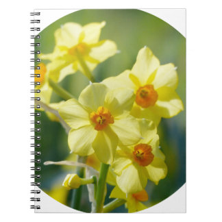 Pretty Daffodils, Narcissus 03.2_rd Spiral Notebooks