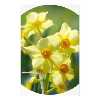 Pretty Daffodils, Narcissus 03.2_rd Stationery