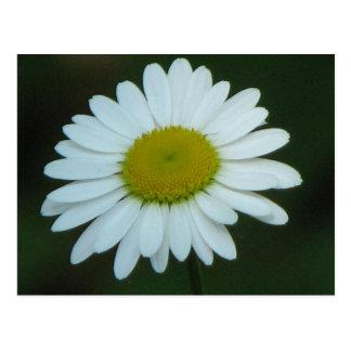 Pretty Daisy Postcard