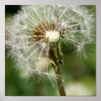 Pretty Dandelion Poster