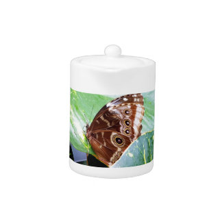 pretty eye butterfly moth brown tan picture bug