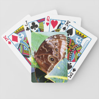 pretty eye butterfly moth brown tan picture bug bicycle playing cards
