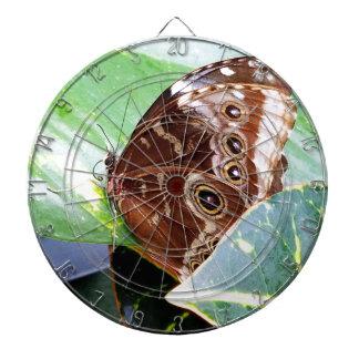 pretty eye butterfly moth brown tan picture bug dartboards