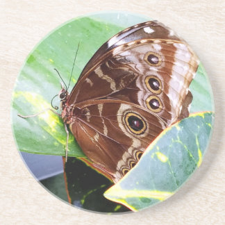 pretty eye butterfly moth brown tan picture bug drink coaster