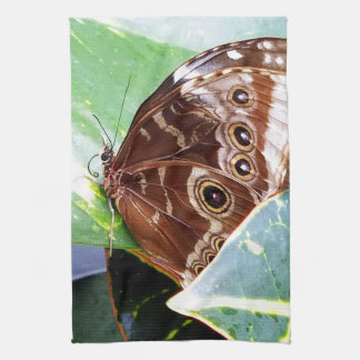 pretty eye butterfly moth brown tan picture bug kitchen towel