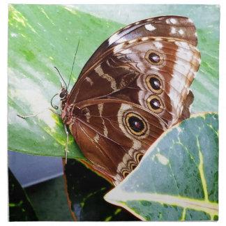 pretty eye butterfly moth brown tan picture bug napkin