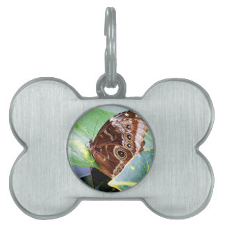 pretty eye butterfly moth brown tan picture bug pet ID tag