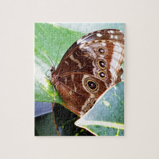 pretty eye butterfly moth brown tan picture bug puzzle