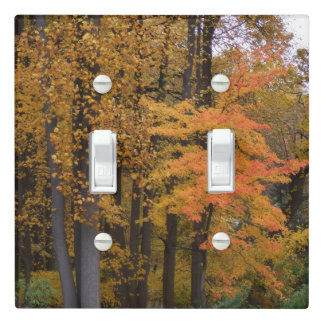 Pretty Fall Colored Trees Light Switch Cover