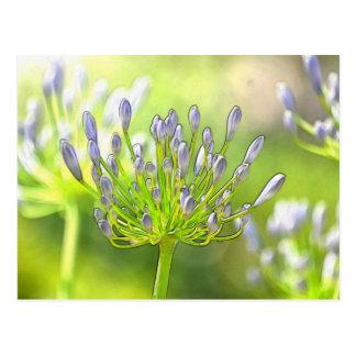Pretty Flower Buds Postcard