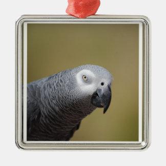 Pretty Grey Parrot Ornaments