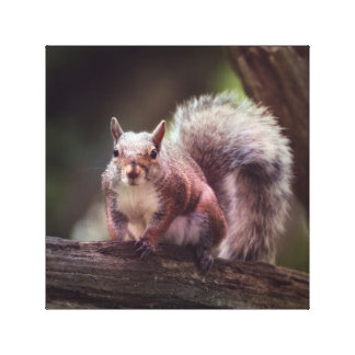 Pretty Grey Squirrel Local Wildlife Photography Canvas Print