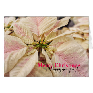 Pretty in Pink Christmas Poinsettia Card