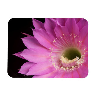 Pretty in pink Maria Piazza Rectangular Photo Magnet