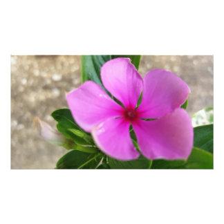 Pretty in Pink Photo Print