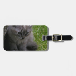 Pretty Kitten Luggage Tag