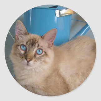 Pretty kitty by watercan round sticker