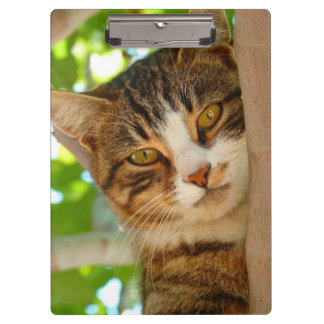 Pretty Kitty Cat Tree Clipboard