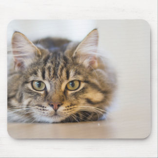 Pretty Kitty Looking at You Mouse Pad