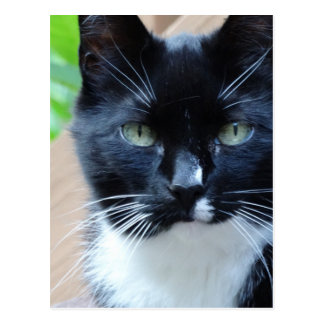 Pretty Kitty Postcard