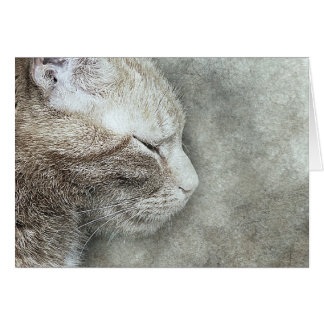 Pretty Kitty Profile | Abstract | Watercolor Card