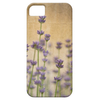 Pretty Lavender Flowers iPhone 5 Cases